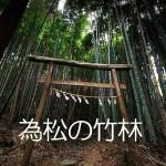 為松の竹林