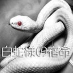 白蛇様の宿命