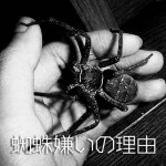 蜘蛛嫌いの理由【閲覧注意】