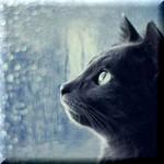 黒猫の恩返し【ほんのりいい話】