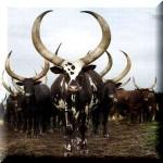牛の墓の話