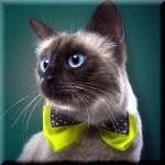 猫のイトマゴイ【ちょっといい話】