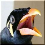 九官鳥の伝言