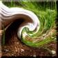 時空の草むしり